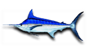 Deep Sea Fishing Blue Marlin