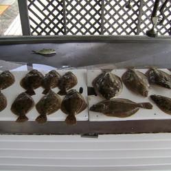 Inshore Fishing Gulf Flounder