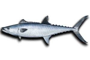 Nearshore Fish King Mackerel