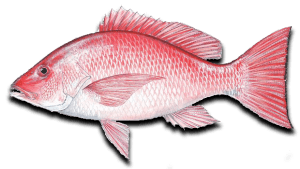 Nearshore Fishing Red Snapper