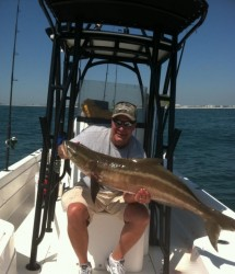 Sea Dog Cobia in Orange Beach