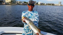 Inshore Speckled Trout