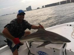 Nearshore Fishing Blacktip Shark
