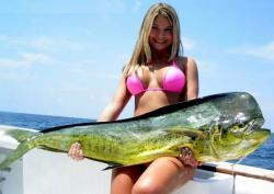 Deep Sea Fishing Mahi-Mahi or Dolphin Fish